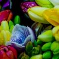 flora-fresia-termeszto-csokor.jpg
