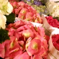 flora_hortenzia_cserepes_viragpiac.jpg
