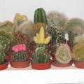 flora_kaktuszok_viragpiac_szigetszentmiklos.jpg