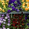 flora_kulso_arvacska_nagybani.jpg