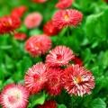 flora_nagybani_kulso_szin.jpg