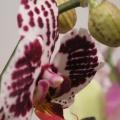 flora_orchidea_termesztes_vasarlas.jpg