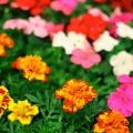 flora_szigetszentmiklos_egynyari_vasarlas.jpg