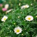 flora_termesztes_egynyari_viragpiac.jpg