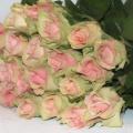 flora_vagott_rozsa_eladas_termesztes.jpg
