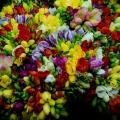 flora_vasarlas_csokor_frezia.jpg